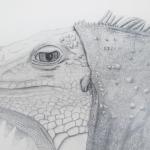 Zeichnung Leguan